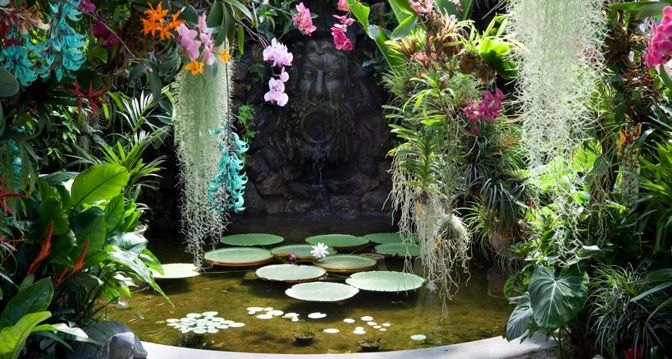La fioritura di Victoria Amazonica ai Giardini La Mortella di Forio d'Ischia, creati da Susane Walton nel 1956. Fanno parte del network Grandi Giardini Italiani