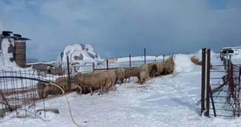 Neve in provincia di Bari