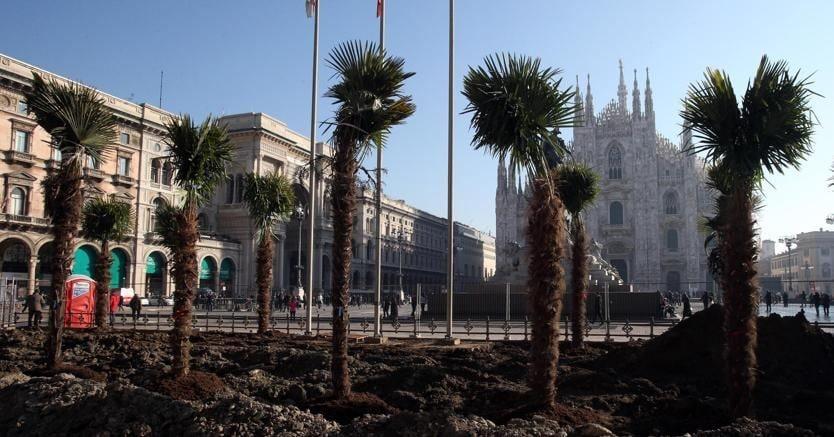 Alcune delle palme piantumate in piazza del Duomo a Milano (Ansa)