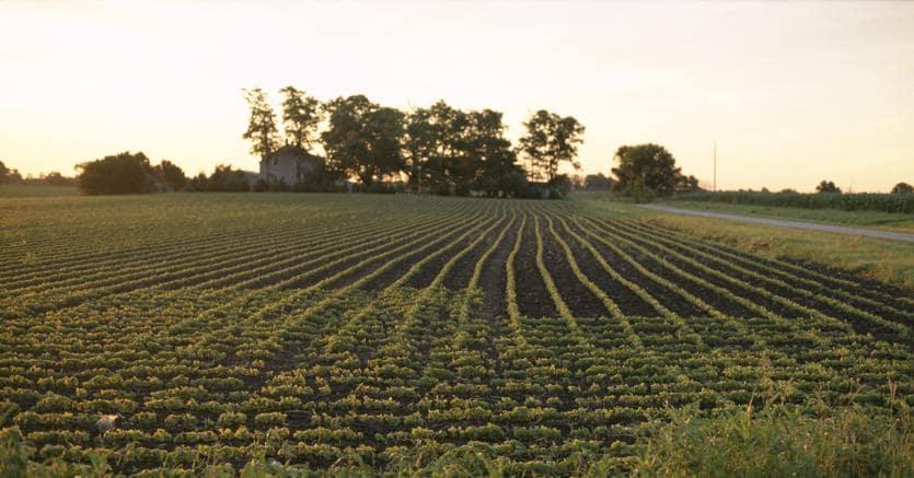 Una banca dati dei terreni agricoli, il progetto che parte dai giovani