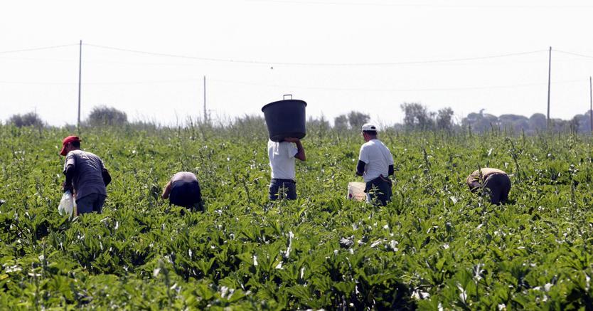 Cosenza, sfruttamento migranti: eseguite 14 misure cautelari