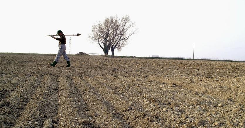 Siccità nelle campagne
