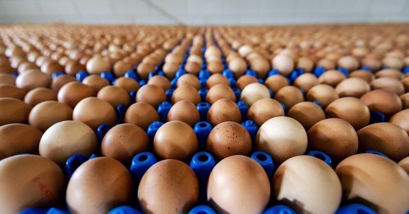 Uova contaminate dal Fipronil trovate anche a Roma