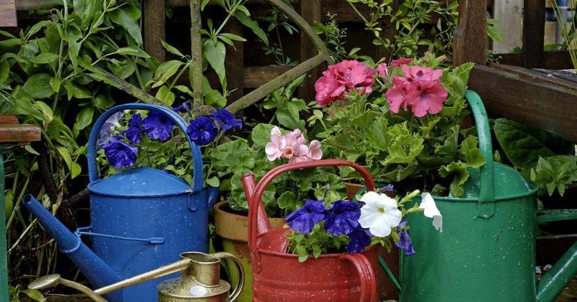 A padova fiori e piante d italia un comparto da 2 6 for Piante da frutto nord italia