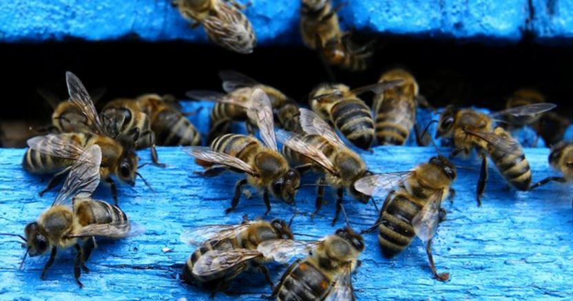 Ue, stop a pesticidi che uccidono api