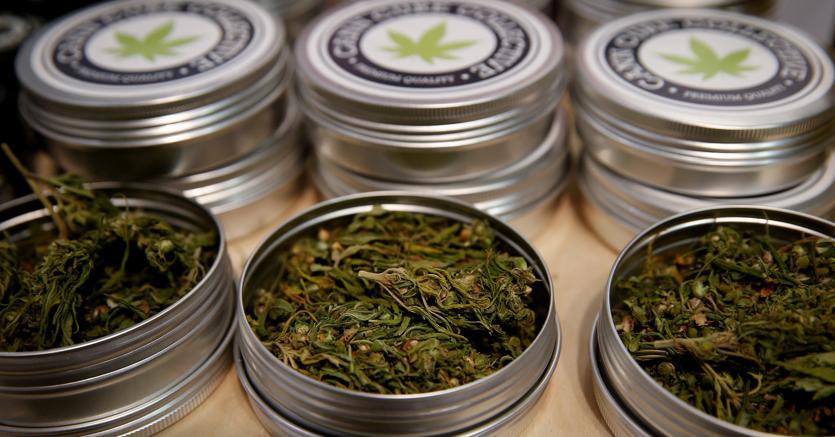 Cannabis light, che succede ora?