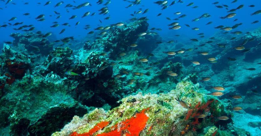 Mappatura dei fondali marini ad alta risoluzione il sole for Immagini coralli marini