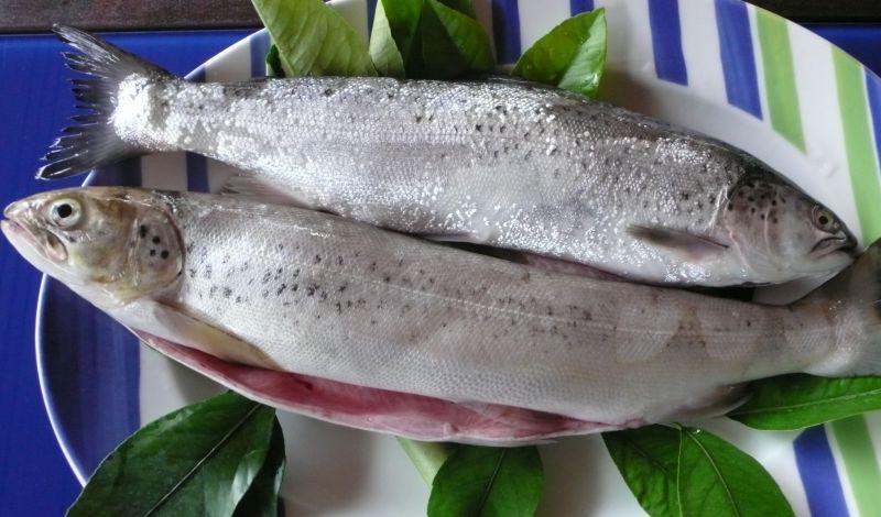 pesce lago di garda