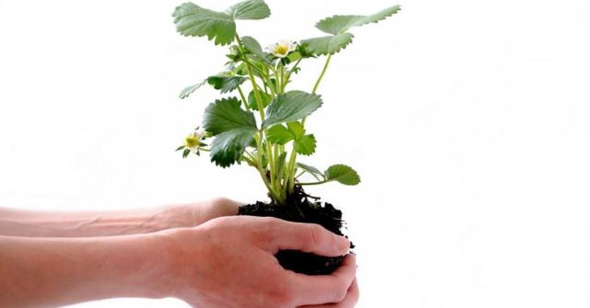 Dai cappuccini di frutta all'acqua di betulla e il brodo di canapa: 10 novità bio al Sana