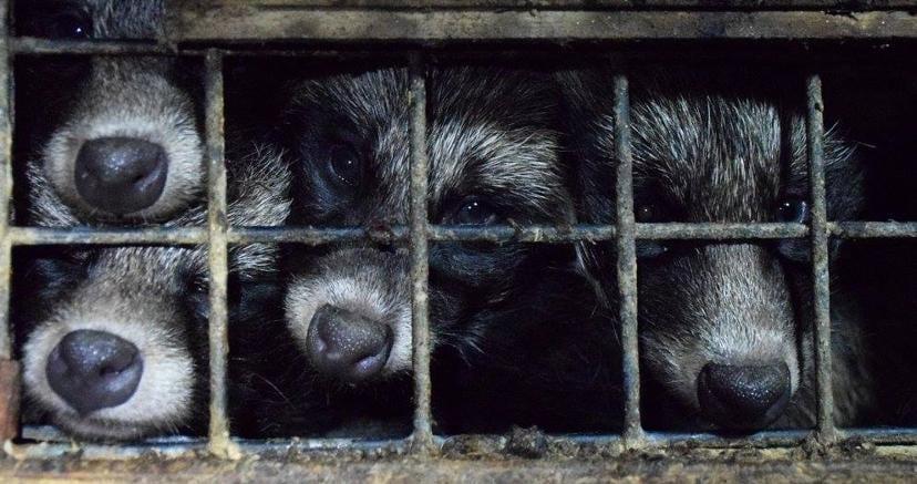 Versace e Furla, basta pellicce animali: