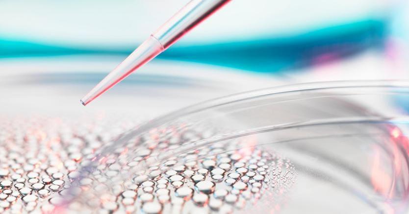 Ottenuto il primo embrione artificiale: è di un topo