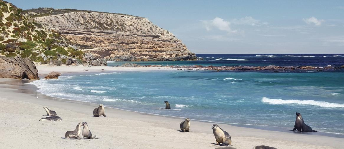 Seal Bay Conservation Park, Kangaroo Island (Credit:  South Australian Tourism Commission /ph Paul Torcello)