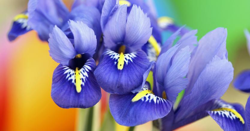 Giardino dell 39 iris a firenze - Giardino dell iris firenze ...