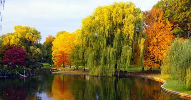 Boston Public Garden (foto cailisi da Flickr.com)