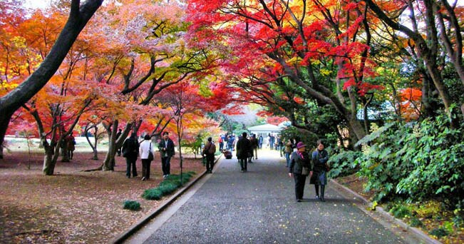 Foliage a Tokyo (foto Mr Snoopy da Flickr.com)