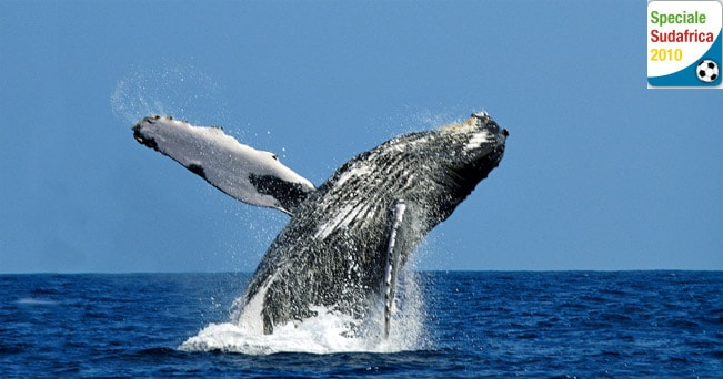 Sudafrica il canto delle balene sulla baia di hermanus for Sud africa immagini