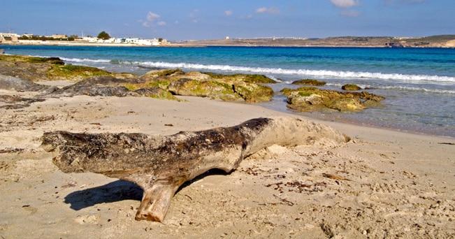Armier Bay, una spiaggia che conserva ancora il suo aspetto selvaggio (foto Peter Treanor / Alamy)