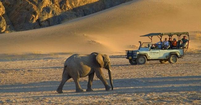 Gli elefanti nel Damaraland (foto Dana Allen)