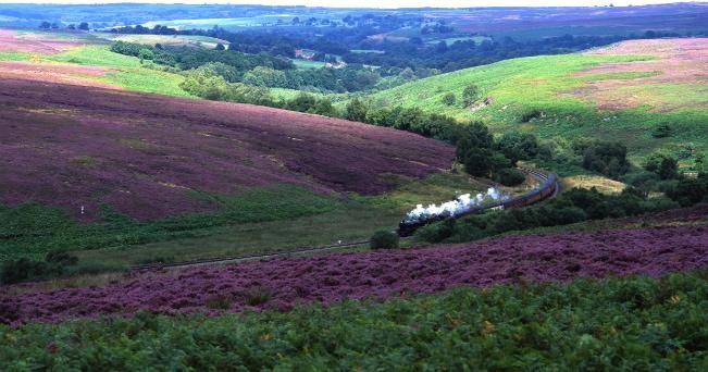 Treno a vapore nella brughiera coperta di erica (British Tourist Authority)