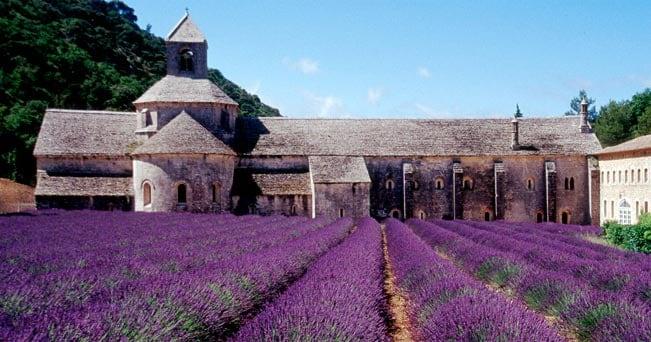 I campi di lavanda intorno all'abbazia di Sénanque, nel Luberon, a circa 40 km da Avignone
