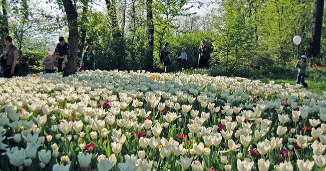 Fioritura di tulipani al Castello di Pralormo (PH. I parchi più belli d  b79612d005c