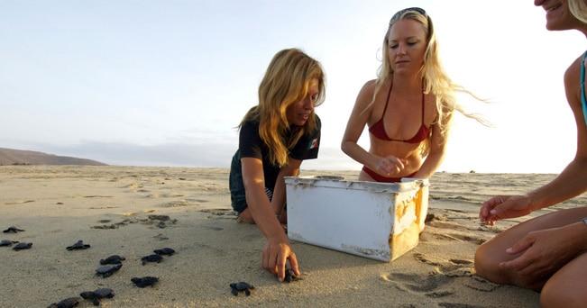 Tre ragazze raccogono tartarughe marine appena nate su  una spiaggia del Messico (foto Travis Rowan / Alamy)