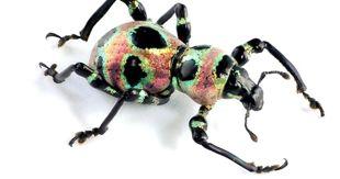 Api Zanzare Calabroni Asiatici Cosi La Tecnologia Sta Entrando Nel Mondo Degli Insetti Il Sole 24 Ore