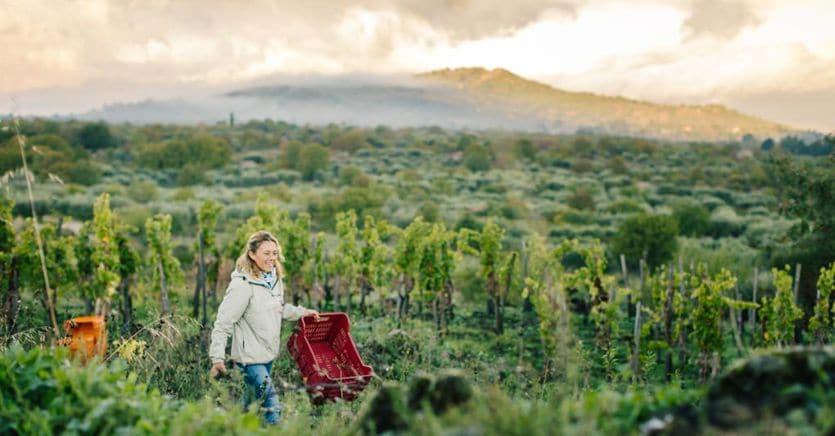 Il vino siciliano regge l'urto del Coronavirus