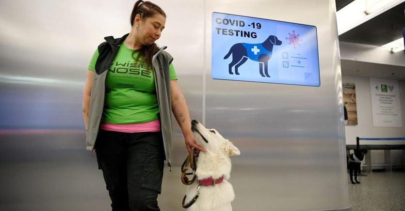 Cani in aeroporto per trovare i positivi al coronavirus. Esperimento in Finlandia thumbnail