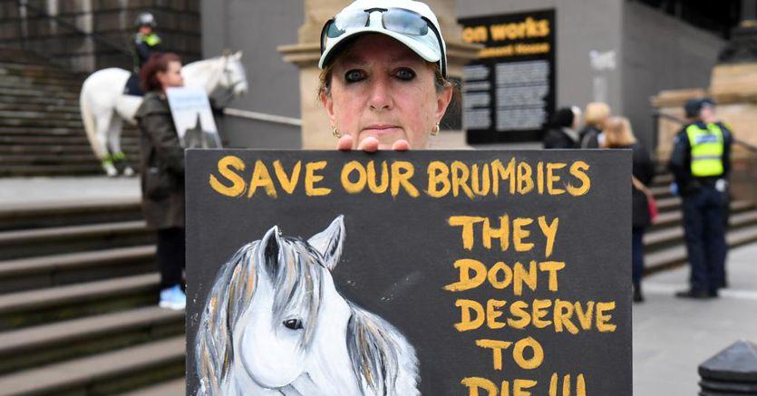 Gli australiani divisi a cavallo dei Brumby