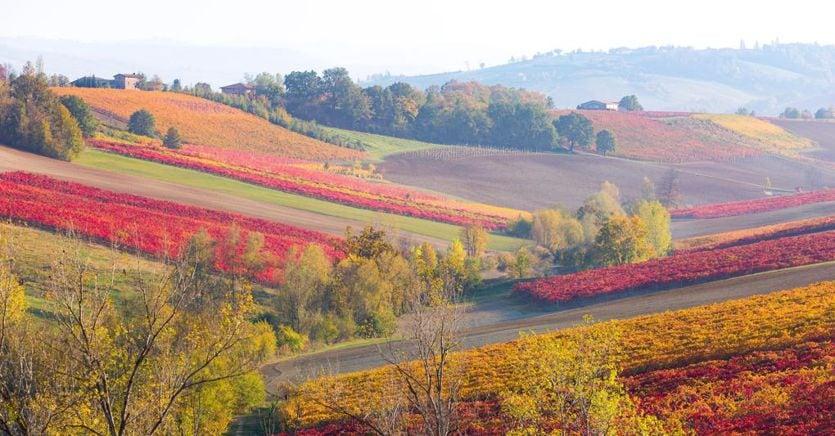Dal Lambrusco ai vini toscani, i consorzi stringono alleanze