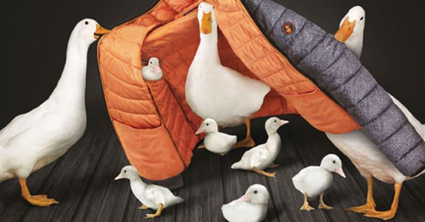 size 40 c4896 842c6 Il fondo Progressio entra in Save the Duck - Il Sole 24 ORE