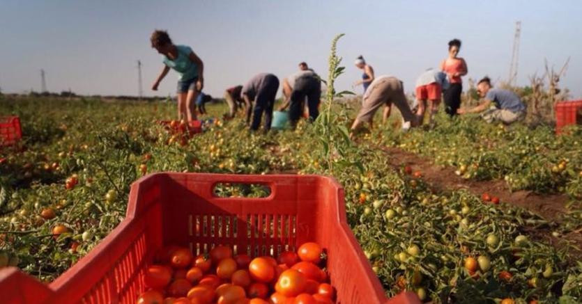 Decreto Flussi Via Libera All Ingresso Di 31mila Lavoratori Extracomunitari Il Sole 24 Ore