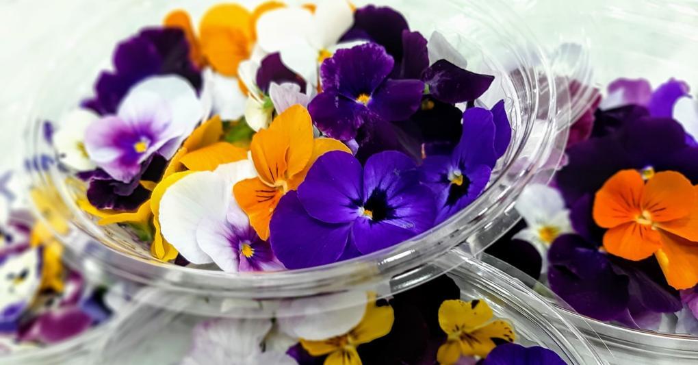 Fiori Eduli.Ricchi Di Antiossidanti E Vitamine Alla Ri Scoperta Dei Fiori