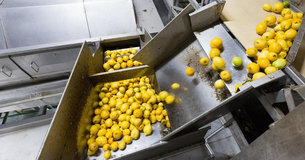 Agrumaria Reggina è specializzata nei  succhi e nei preparati per bevande e fattura 20 milioni