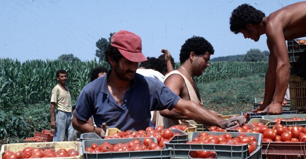 Da Italia Viva al Veneto, prende quota l'idea di usare i disoccupati nei campi