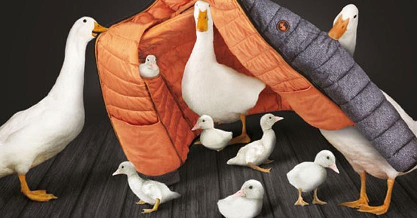 new products ba6ff d39bc Nicolas Bargi di Save the Duck: «Tutti possiamo fare ...