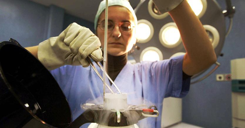 Una biologa  estrae da un apposito contenitore di azoto liquido degli embrioni congelati. (Ansa)