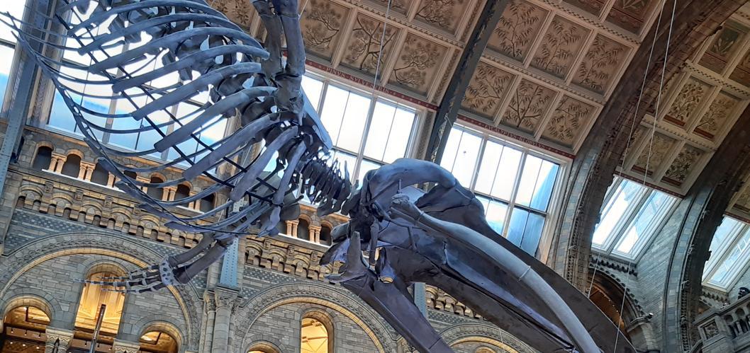 Natural History Museum Foto di Simone Filippetti