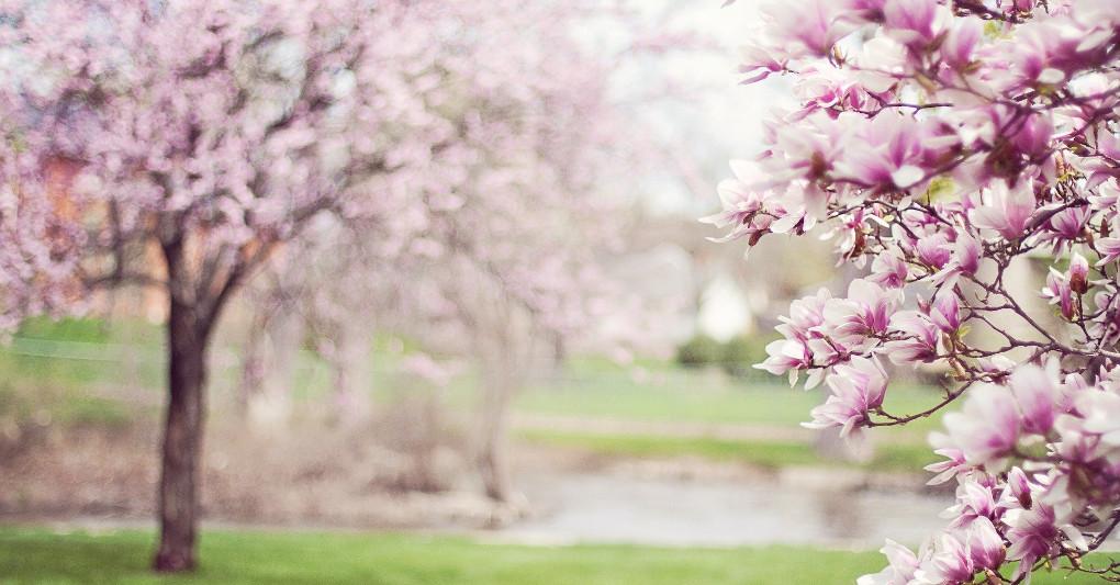 Si può fare primavera