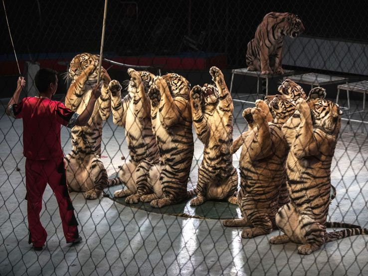 Animali nei circhi: the show must go on?