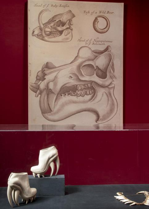 """Iris van Herpen, scarpe """"Fang"""" Spring/Summer 2012 Couture. Ornamento di denti di babirussa, Nuova Guinea, XIX secolo Firenze, Museo di Storia Naturale, Antropologia ed Etnografia, Collezione Ugo Biondi. (© Antonio Quattrone)"""