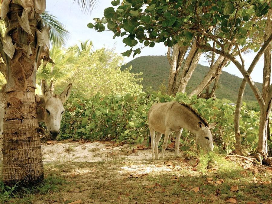 Nanna Debois Buhl, Donkey Studies, 2008, C-print