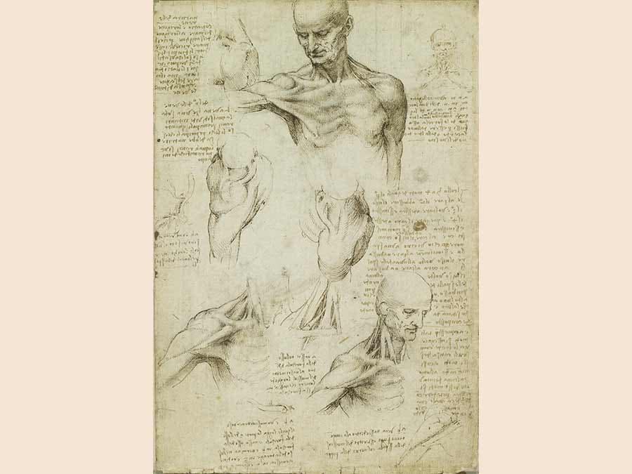 Leonardo da Vinci, The Anatomy of the Shoulder and Neck (Royal Collection Trust/© Her Majesty Queen Elizabeth II 2019)