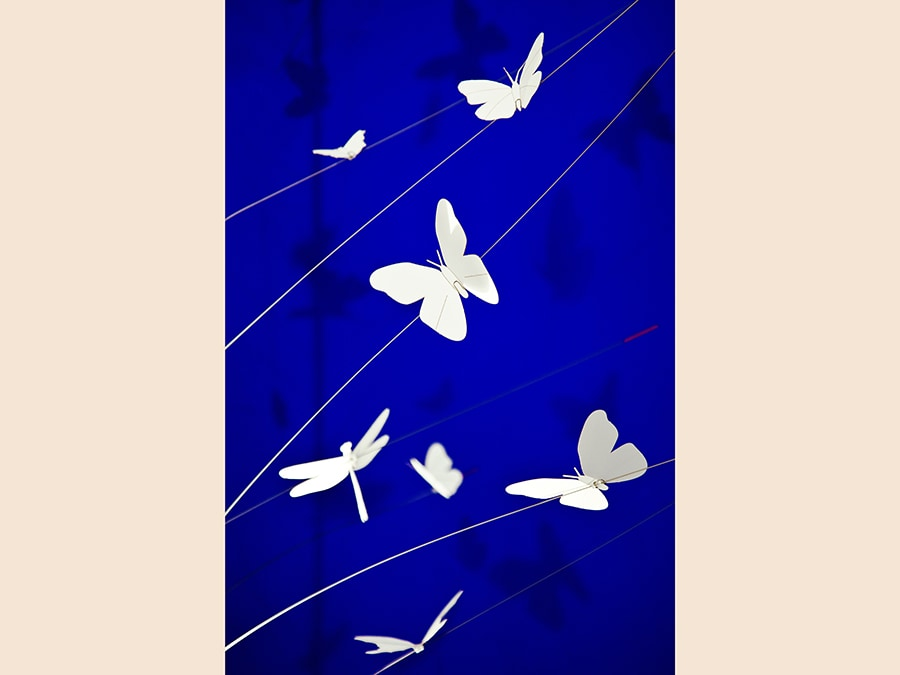 La Festa delle Farfalle Blue