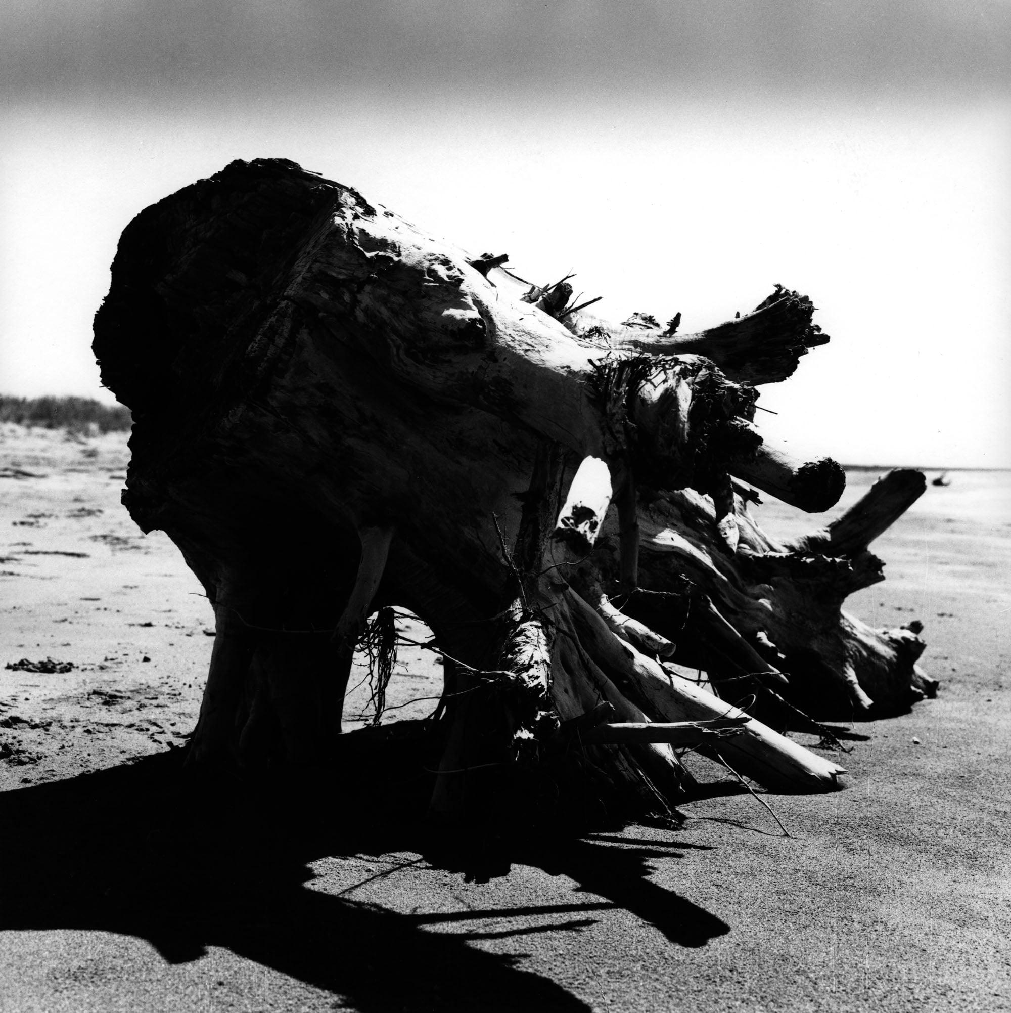 Franco Grignani, La morte estate, 1958, Gelatina bromuro d'argento/carta, 30,5x30,5 cm, Mufoco, Museo di fotografia contemporanea