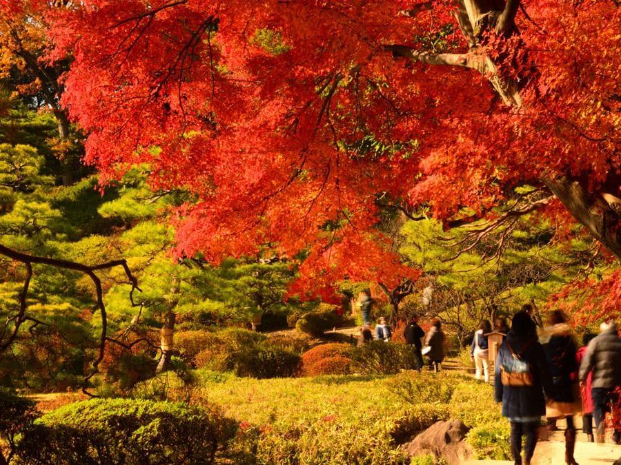 Nei giardini Rikugien, situati nel quartiere Bunkyo, nella zona nord di Tokyo dal 20 novembre al 12 dicembre, dove si trovano diverse varietà di aceri e zelkove, viene prolungato l'orario di apertura per le speciali illuminazioni serali. Al calare del sole il contrasto delle foglie con il cielo scuro rende i colori ancora più vibranti, regalando scorci unici di questa area verde che ha da sempre ispirato artisti e poeti e rientra nel patrimonio culturale della città.