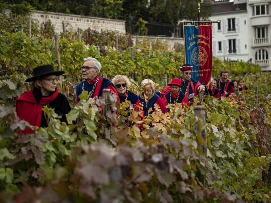 Membri della Repubblica di Montmartre alla vendemmia nel Clos de Montmartre. Un piccolo vigneto che produce 500 litri di vino all'anno chiuso al pubblico dal 1933 per preservare questo angolo di natura nella citttà e d evitare nuove costruzioni. (EPA/IAN LANGSDON)
