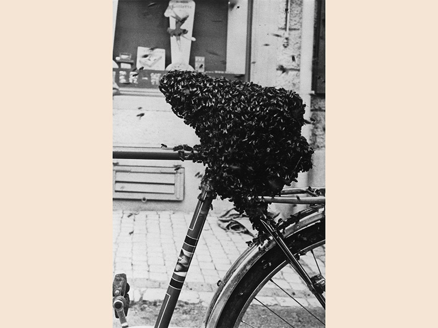 Meret Oppenheim,  Bycicle Seat Covered with Bees, 1952, cm 17 x 11, courtesy Levy Galerie, Hamburg, © Meret Oppenheim by Siae 2019