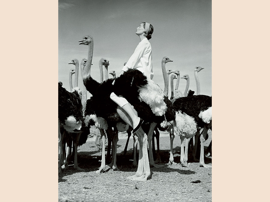 Wenda Parkinson e struzzi fotografi da Norman Parkinson:in Sud Africa per Vogue, 1951.